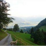 Wanderung am Morgen