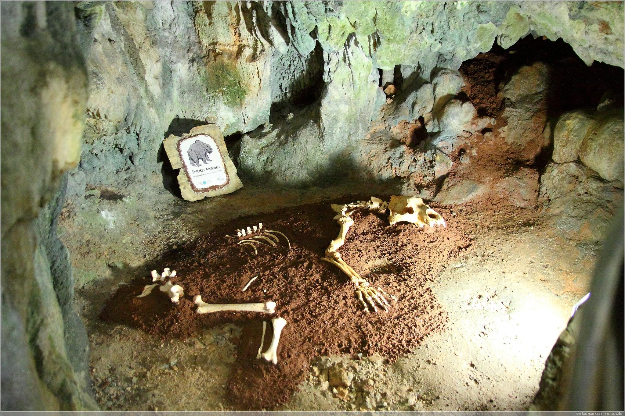 Bärenskelett in der Höhle Biserujka
