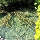 klares Wasser im Plitvicer Nationalpark