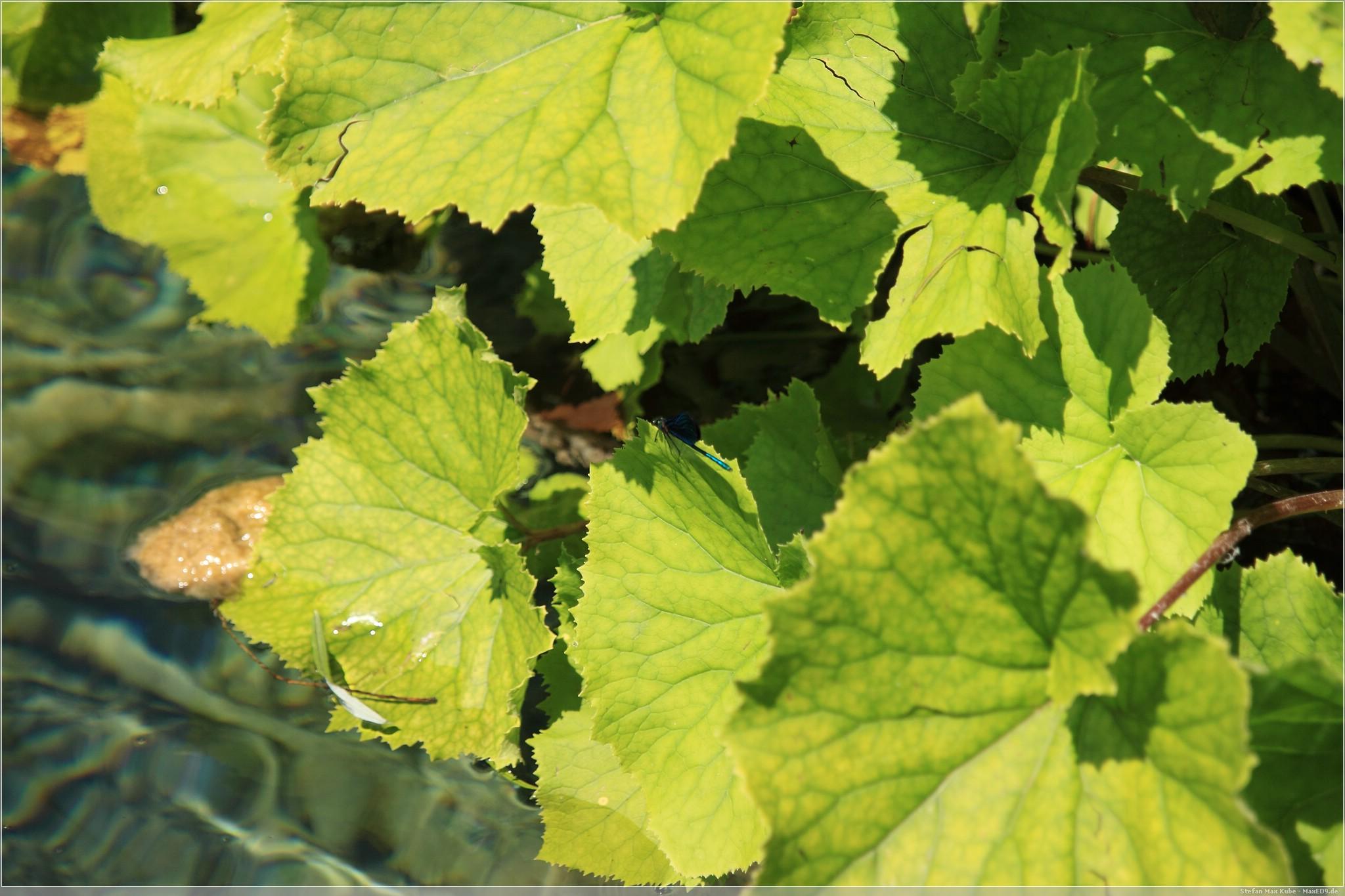 Libelle im Plitvicer Nationalpark