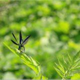 Libellen im Plitvicer Nationalpark