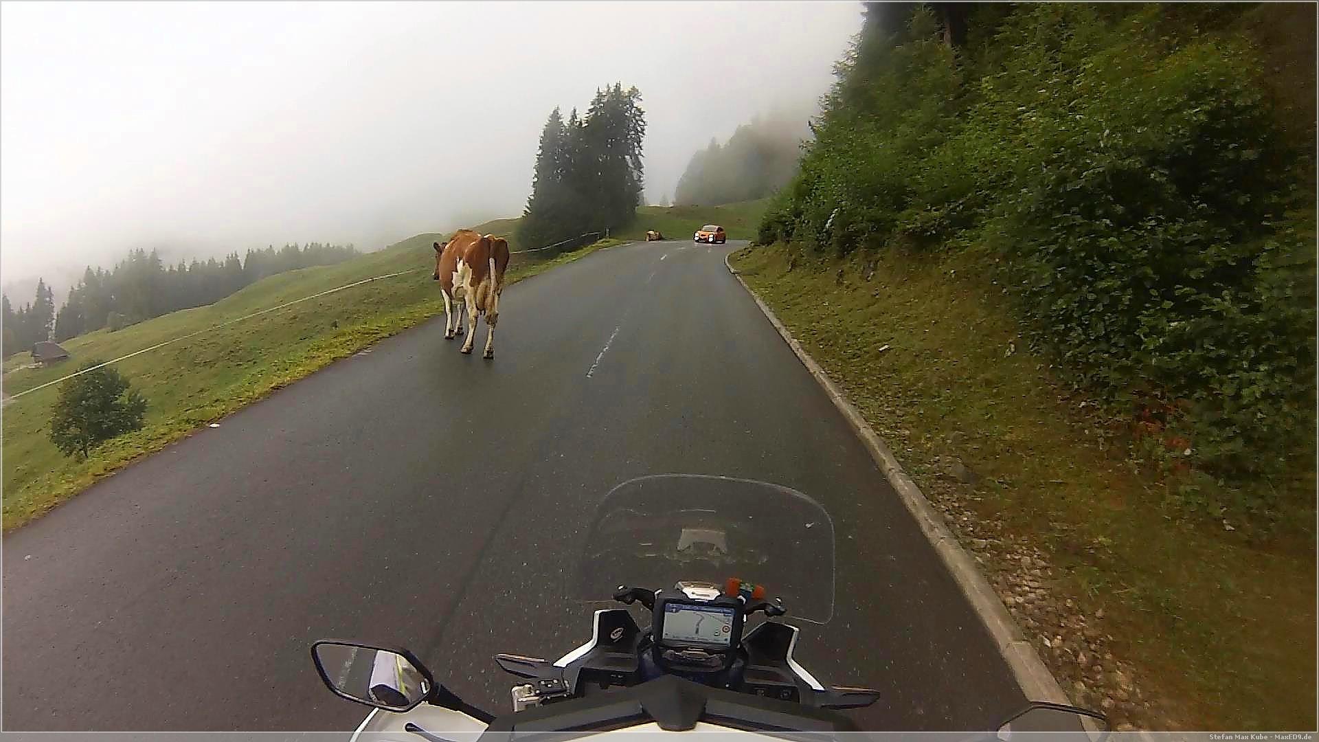 da steht ne Kuh