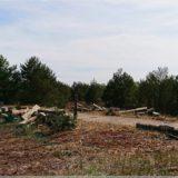 Schienenschwellen als Eidechsen-Habitat