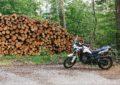 die Reisebraaap vor einem Holzstapel
