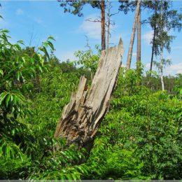 Presseler Heidewald- und Moorgebiet